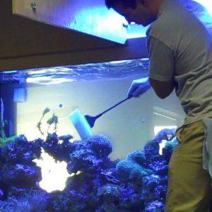 Mantenimiento acuario marino 50 – 250